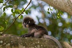 接近的猴子 免版税图库摄影