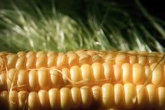 接近的玉米新鲜  免版税库存照片