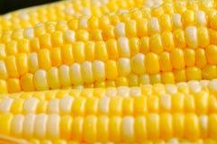 接近的玉米 免版税库存图片