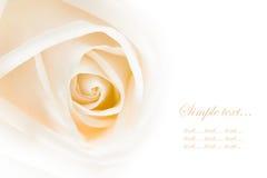 接近的玫瑰色白色 免版税图库摄影
