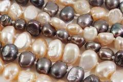 接近的珍珠种子 库存图片