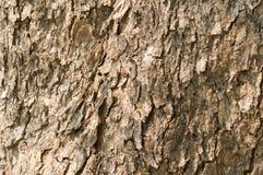 接近的皮肤纹理结构树 免版税库存图片