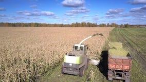接近的看法飞剪机切开玉米词根并且涌入拖车 股票视频