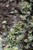 接近的真菌结构树 库存照片