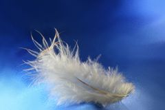 接近的羽毛 库存图片
