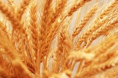 接近的耳朵将上升麦子 免版税库存照片