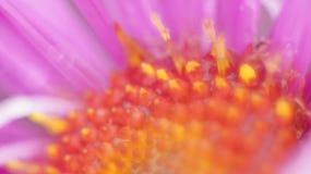 接近的花粉红色 免版税库存照片
