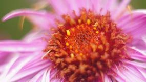 接近的花粉红色 免版税库存图片