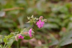 接近的花粉红色 库存照片