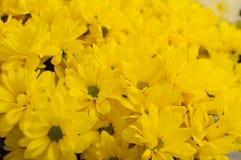 接近的花背景五颜六色开花在庭院里 库存图片
