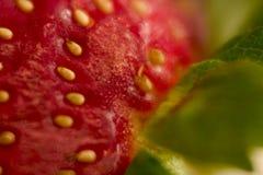 接近的草莓 免版税库存照片