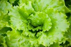 接近的蔬菜沙拉 概念健康生活方式 选择聚焦 库存图片