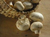 接近的蘑菇 库存图片