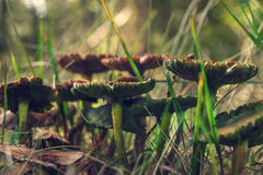 接近的蘑菇 库存照片