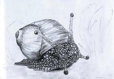 接近的蜗牛 免版税库存照片