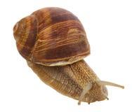 接近的蜗牛 免版税图库摄影