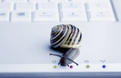 接近的蜗牛 库存照片