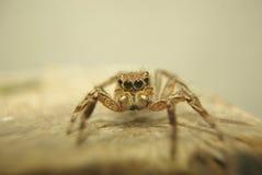 接近的蜘蛛 免版税库存照片