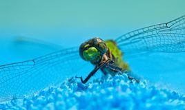 接近的蜻蜓绿色 图库摄影