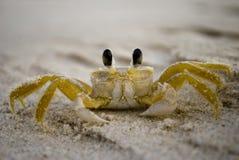 接近的螃蟹 免版税库存照片