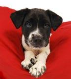 接近的逗人喜爱的小狗 图库摄影