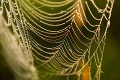 接近的露水小滴放牧叶子早晨理想的水 在spiderweb的光亮的水下落 免版税库存照片
