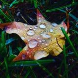 接近的露水小滴放牧叶子早晨理想的水 库存图片