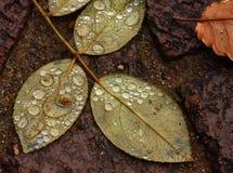 接近的露水小滴放牧叶子早晨理想的水 库存照片
