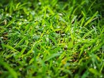 接近的露水小滴放牧叶子早晨理想的水 免版税库存照片