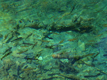 接近的鱼 免版税库存图片
