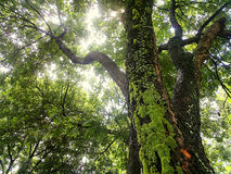 接近的结构树 免版税库存图片