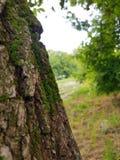 接近的结构树 图库摄影