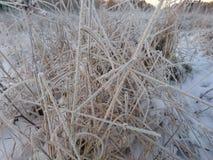 接近的冻结的草 免版税库存照片