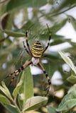 接近的dof宏观浅蜘蛛spiderweb 库存照片