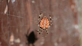 接近的dof宏观浅蜘蛛spiderweb 影视素材