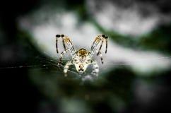 接近的dof宏观浅蜘蛛spiderweb 免版税库存图片