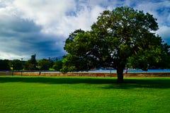 接近通报公园码头结构树 免版税库存图片