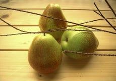 直接绿色水多的梨从庭院 免版税库存图片