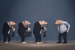 控制失败者猪小组 免版税库存照片