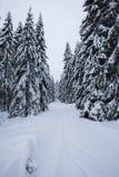 推挤通过在一个多雪的倾斜的雾的Backcountry滑雪者 游览在严冬情况的滑雪 滑雪游览车炫耀 图库摄影