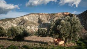 推车在一棵橄榄树下 免版税库存照片