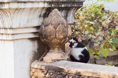 掩藏在一个被雕刻的石墙上的黑白猫在亚洲 免版税库存照片