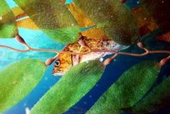 掩藏在叶子后的鱼 库存照片