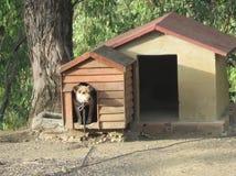 掩藏在对砖修造狗窝的ood附录的狗 图库摄影