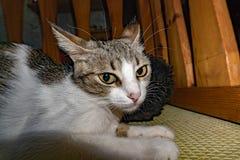 掩藏在床下的好奇猫 图库摄影