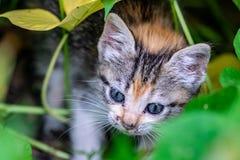 掩藏在庭院灌木的幼小小猫 免版税库存照片