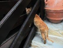 掩藏在房子的栏杆和凝视下的红色蓬松猫在嫉妒 免版税库存照片