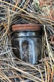掩藏在杉木针1的微小的瓶子 库存图片