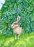 掩藏在杉树水彩动物例证下的野兔手画 免版税库存照片