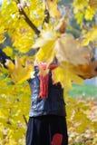 掩藏在枫叶后和掩藏她的面孔的愉快的女孩 图库摄影